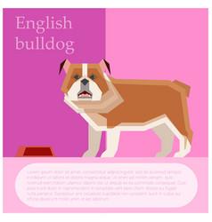 English bulldog postcard vector