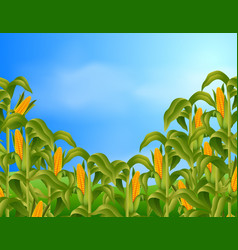 Farm scene with fresh corn vector