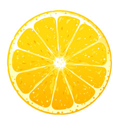 One orange fruite slice vector