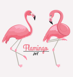 set two pink flamingos vector image