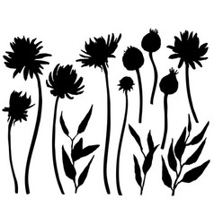 silhouettes asters and chrysanthemums floral vector image