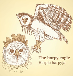 Sketch harpia bird head in vintage style vector image