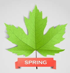 Maple leave with spring banner vector image