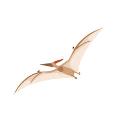 Flying pterosaur or pterodactyl dino extinct vector