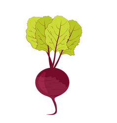 Fresh beet with green leaves vector