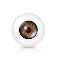 photo realistic eyeball human retina vector image