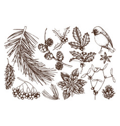 Christmas plants collection vector