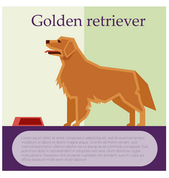 Golden retriever colourful postcard vector