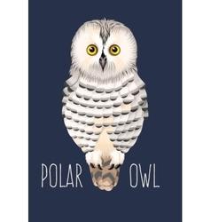 Polar owl vector