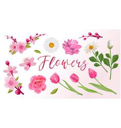 set spring flowers sakura tulips roses vector image