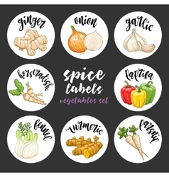 Spices herbs labels Colored vegetables set vector