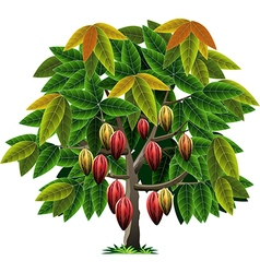 Cocoa tree vector