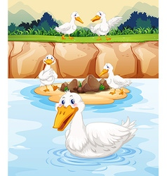 Five ducks at the pond vector image