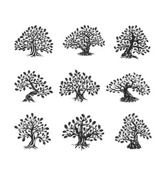 Huge and sacred oak tree silhouette logo isolated vector