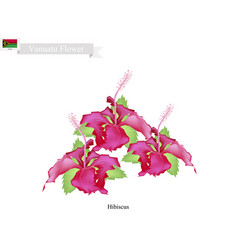 National flower of vanuatu the hibiscus flowers vector