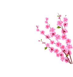 Sakura decorative flowers of cherry with buds on vector