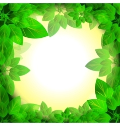 leaves sunny frame vector image