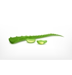 Aloe vera with slice vector image
