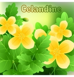 Beautiful spring flowers Celandine Cards or your vector image