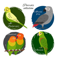 Colorful parrot icon set vector