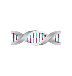 genetic information dna with bases in color vector image