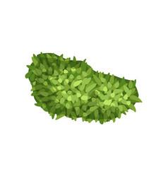 Plant landscape natural design element top view vector