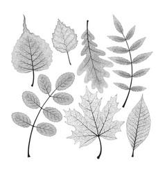 set of high detailed skeleton leaves vector image