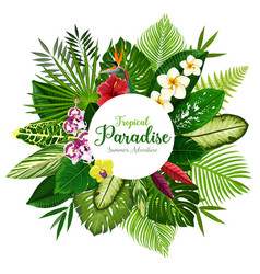 summer holidays banner of tropical palm and flower vector image