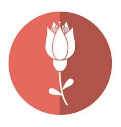tulip flower decoration image shadow vector image