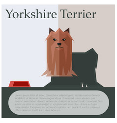 yorkshire terrier colourful postcard vector image vector image