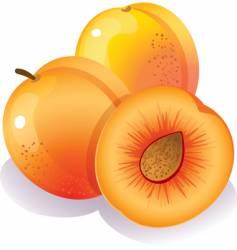 peach vector image vector image