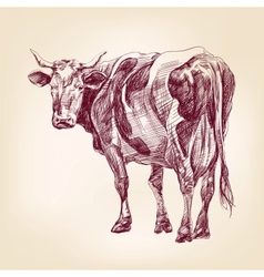 cow hand drawn llustration realistic sketch vector image vector image