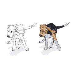 Drawing of running beagle with shadow on white vector image