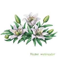 Lilies watercolor vector image
