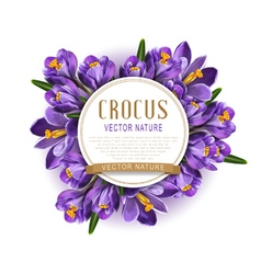 Blue crocuses with white card round vector image vector image