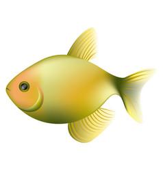 color fish icon image vector image