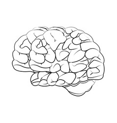 human brain medical science section schematic vector image