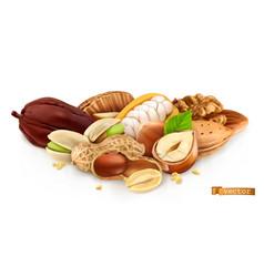 Nuts peanut hazelnut pistachios almond cocoa bean vector