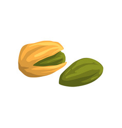 pistachio nut nutritious natural product vector image