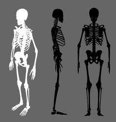 skeleton silhouette vector image