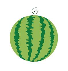 Watermelon whole ripe green stem icon green red vector