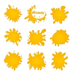 Honey splash set of labels Splashes and drops vector image