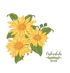 Calendula flowers and leaves floral composition vector