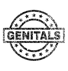 Grunge textured genitals stamp seal vector