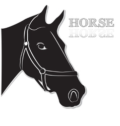 Horse head in black and white vector image