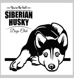 Siberian husky - for t-shirt vector