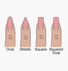 Different nail shapes vector