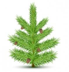 fur tree vector image