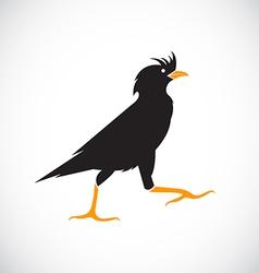 Image of anacridotheres Bird vector image