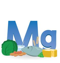 Magnesium rich foods vector